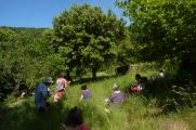 Dessiner les arbres 1