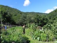 20140709 jardin 2